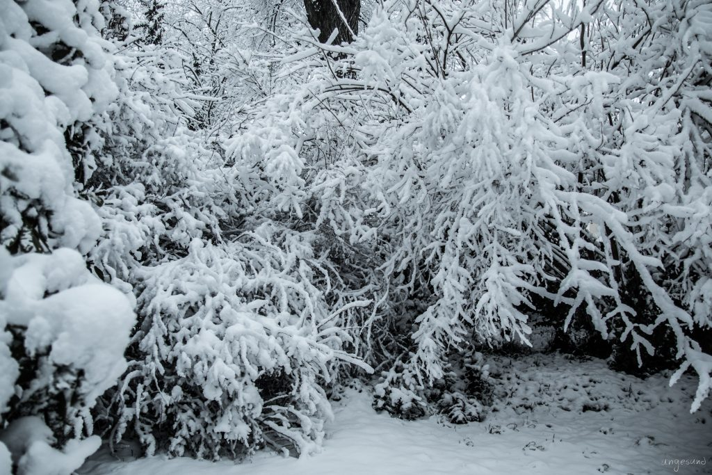 Schneebedeckter Morgen