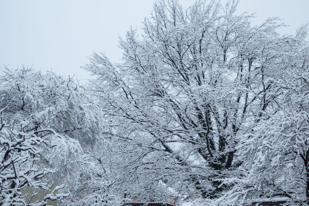 Weißes Katastrophenpulver auf allen Bäumen