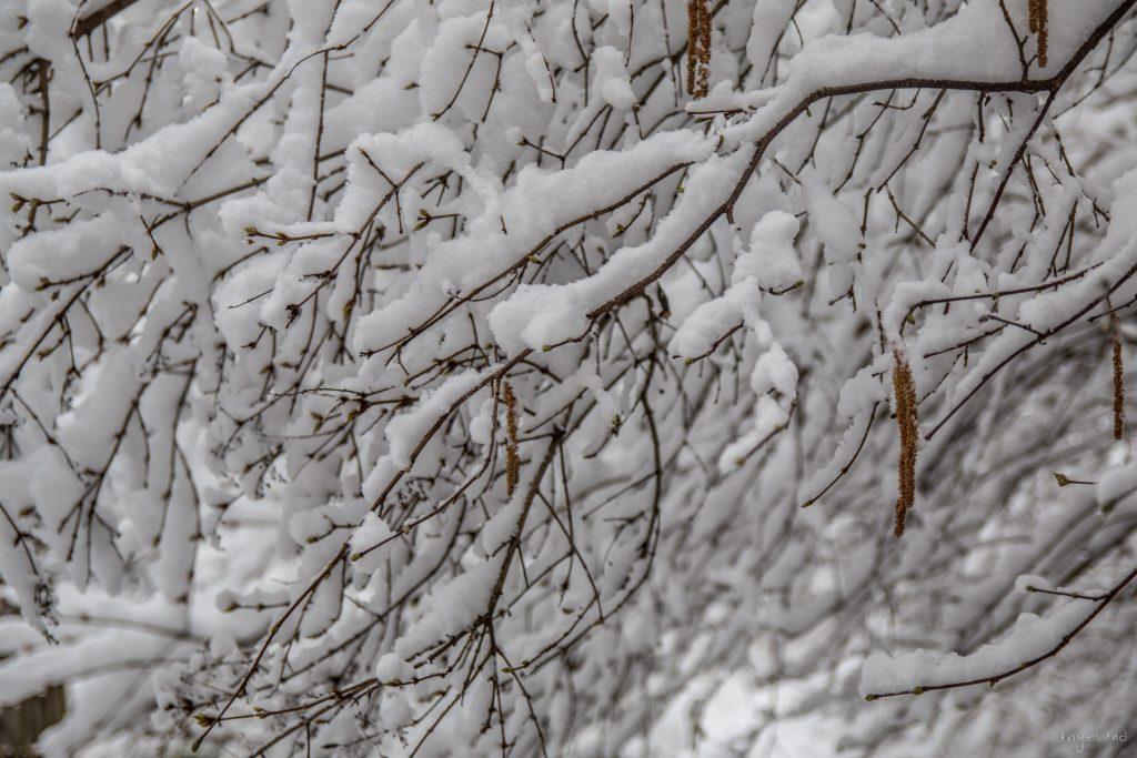 Schnee auf allen Ebenen