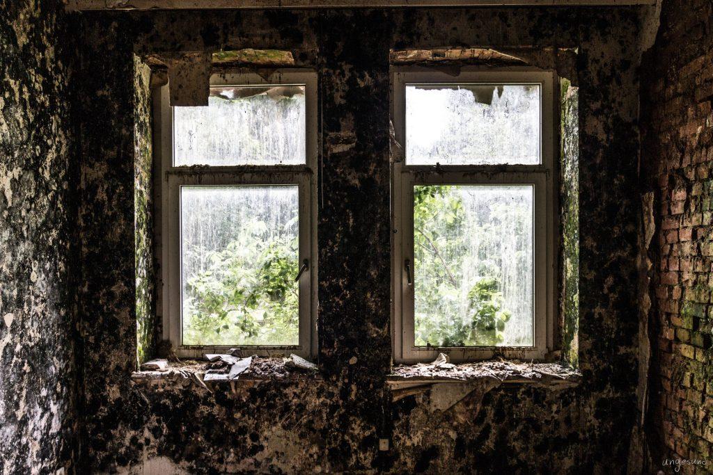 Fensterpilzblick im Harz