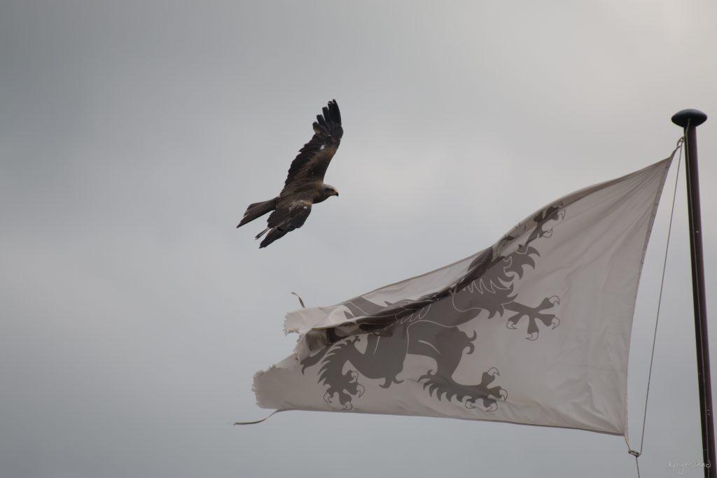 an der Fahne