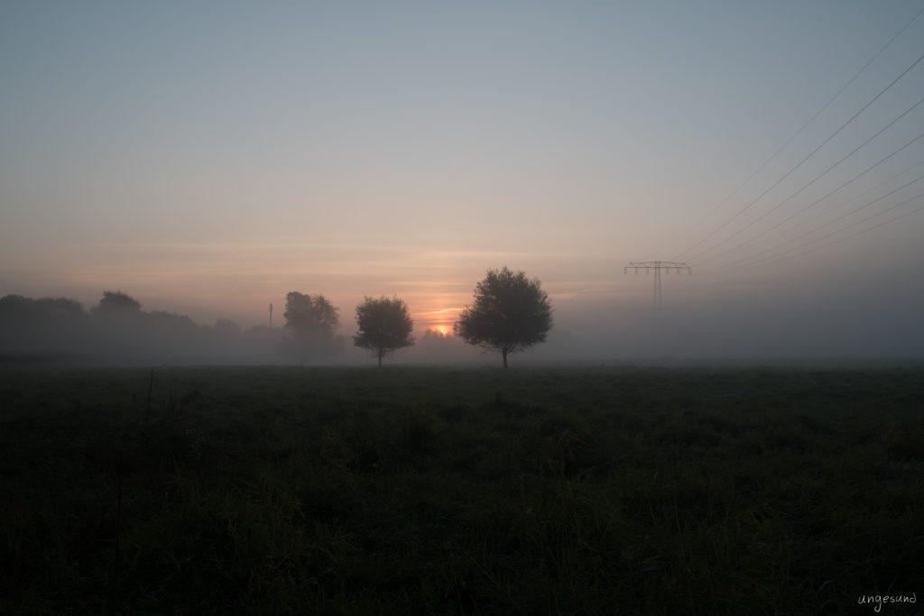 Sonne kommt