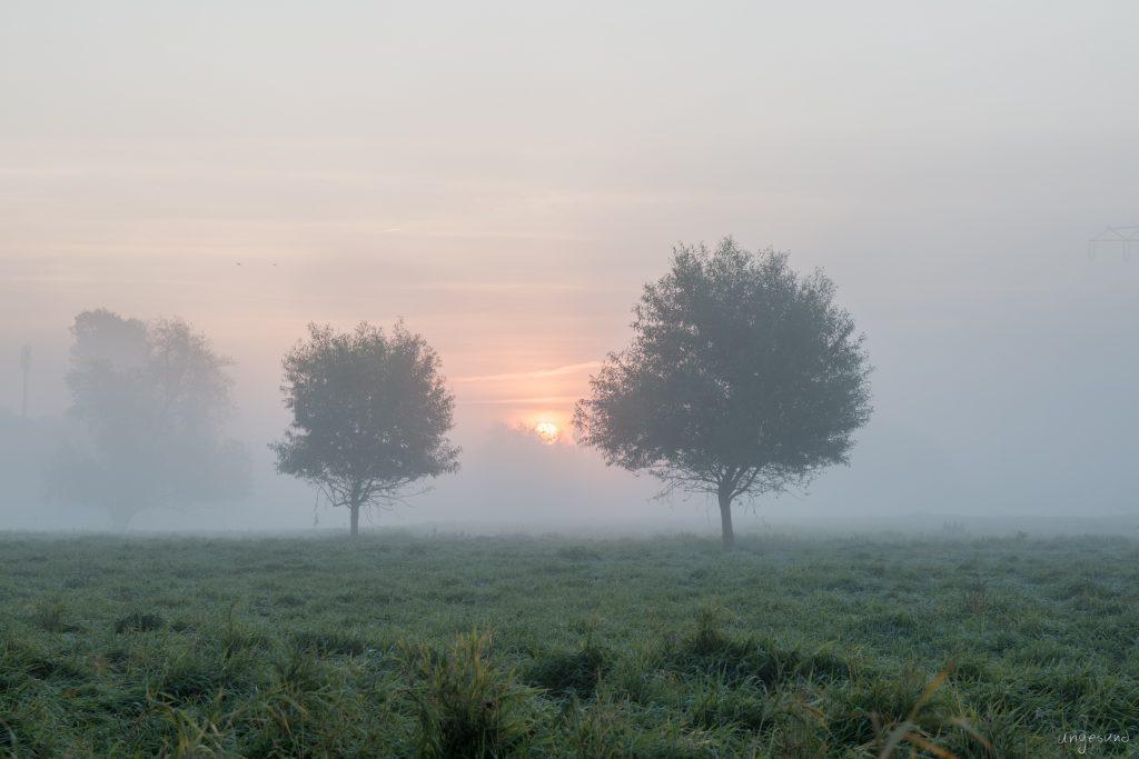 2 Bäume mit HDR