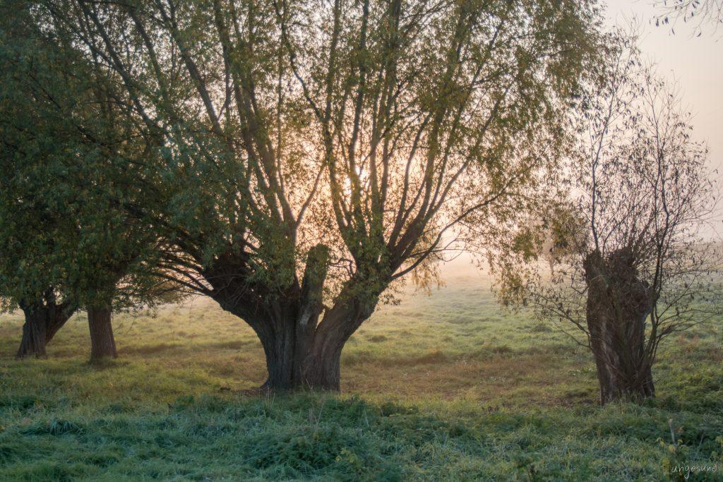Großer Baum (HDR)