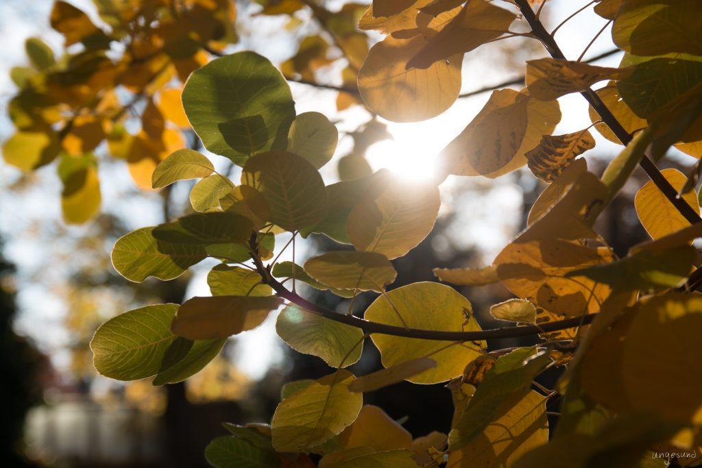 Herbstfarbpalette